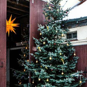 Feiern Sie Ihre Weihnachtsfeier im Kuhstall