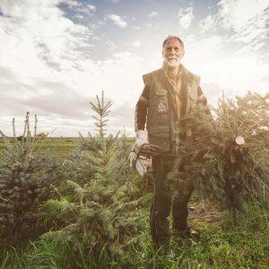 Weihnachtsbäume online bestellen